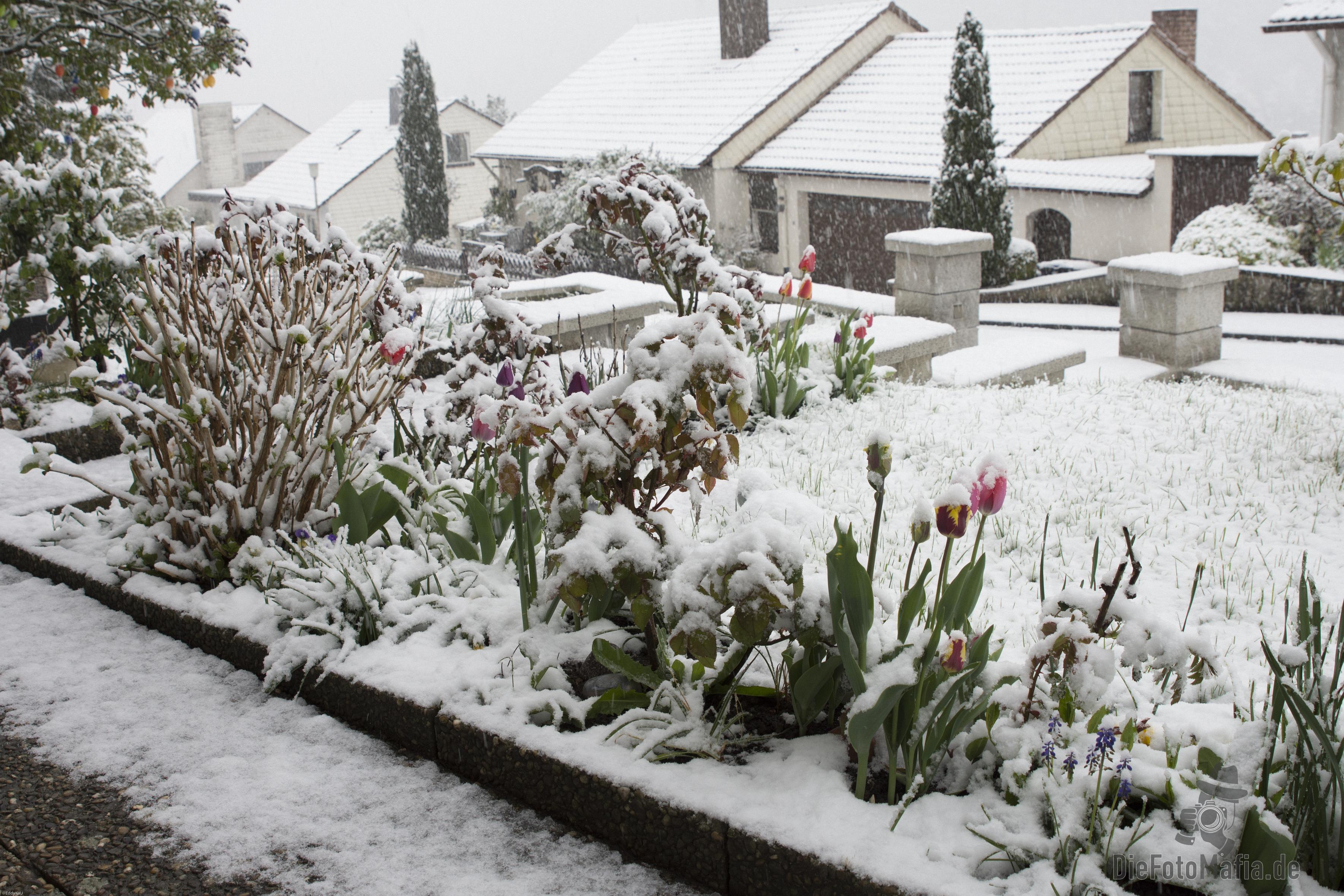 Schneetreiben in Uckersdorf